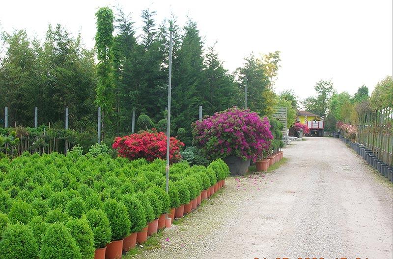 Piante nane da giardino piante da giardino con fiori for Conifere da giardino